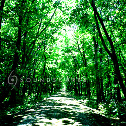 soundscapes2_forest